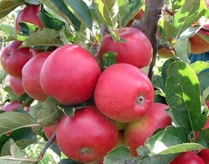 Fruitfulness and fulfillment